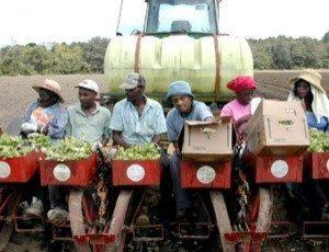 black farmers money 2013 followclub
