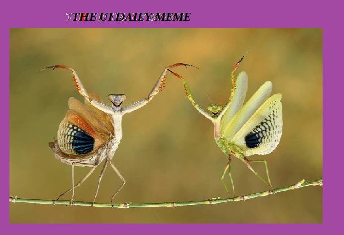 UI Daily Meme